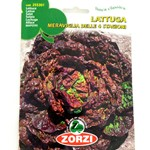 ZORZI RED LETTUCE SEEDS